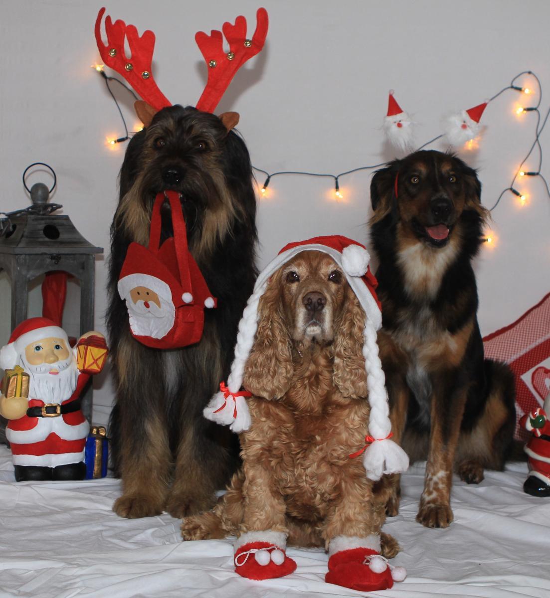 Hunde frohe Weihnachten